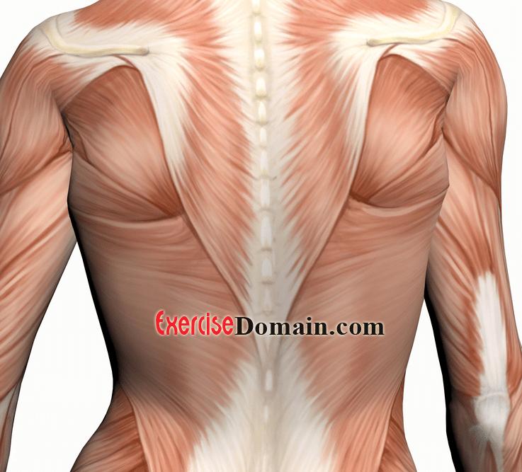 Back Exercises